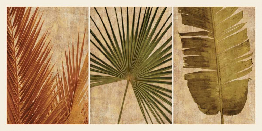 Palm Vista II Seba, John 54769