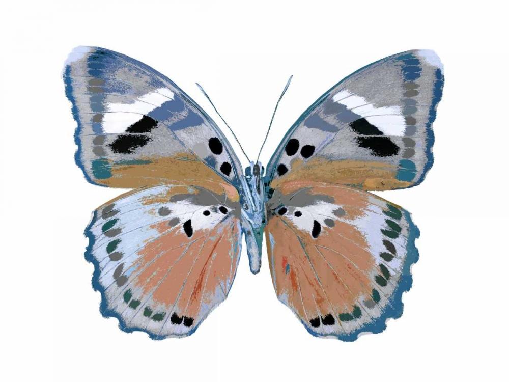 Butterfly in Pink II Bosco, Julia 125138