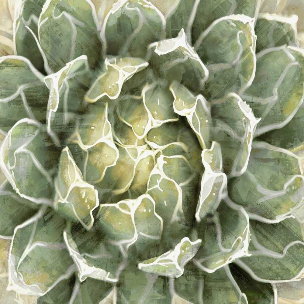 Succulent Verde III Benson, Lindsay 150599
