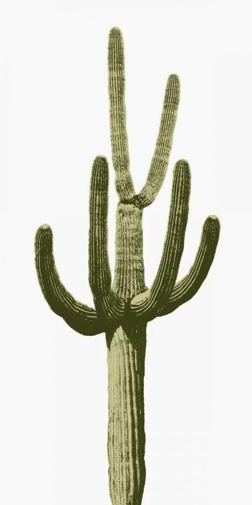 Saguaro III Jensen, Mia 150611