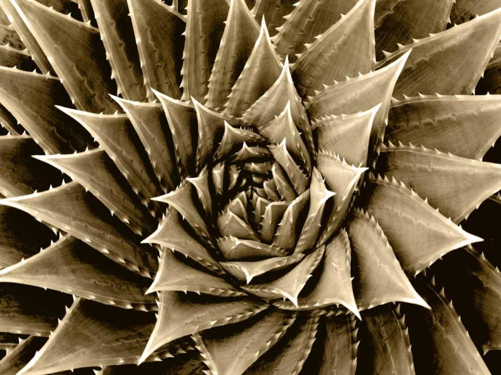 Succulent Taupe I Jensen, Mia 150627