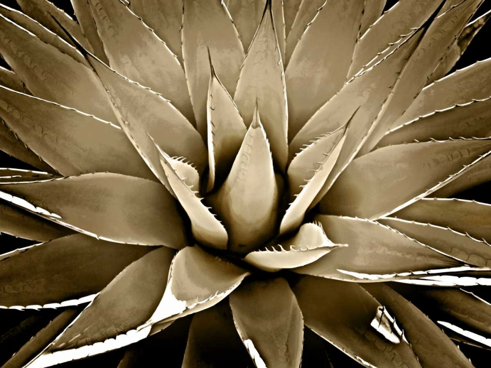 Succulent Taupe III Jensen, Mia 150629