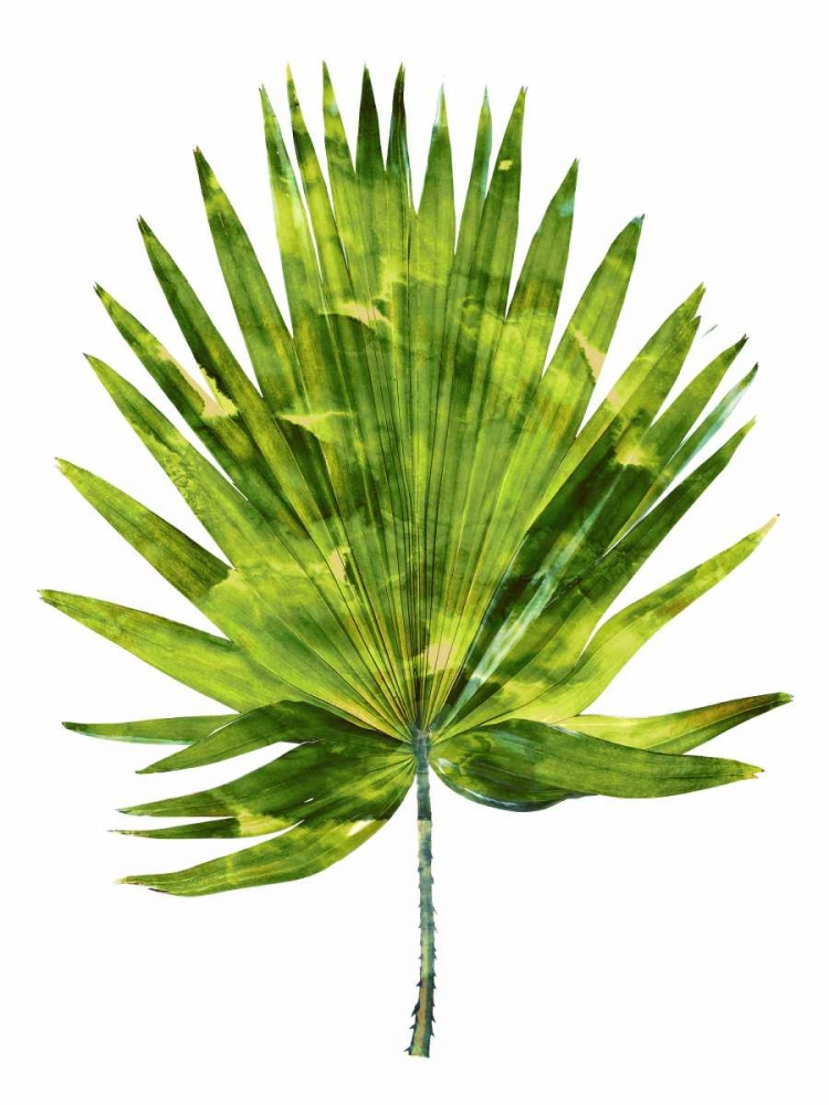 Palm IV Miller, Melonie 150673
