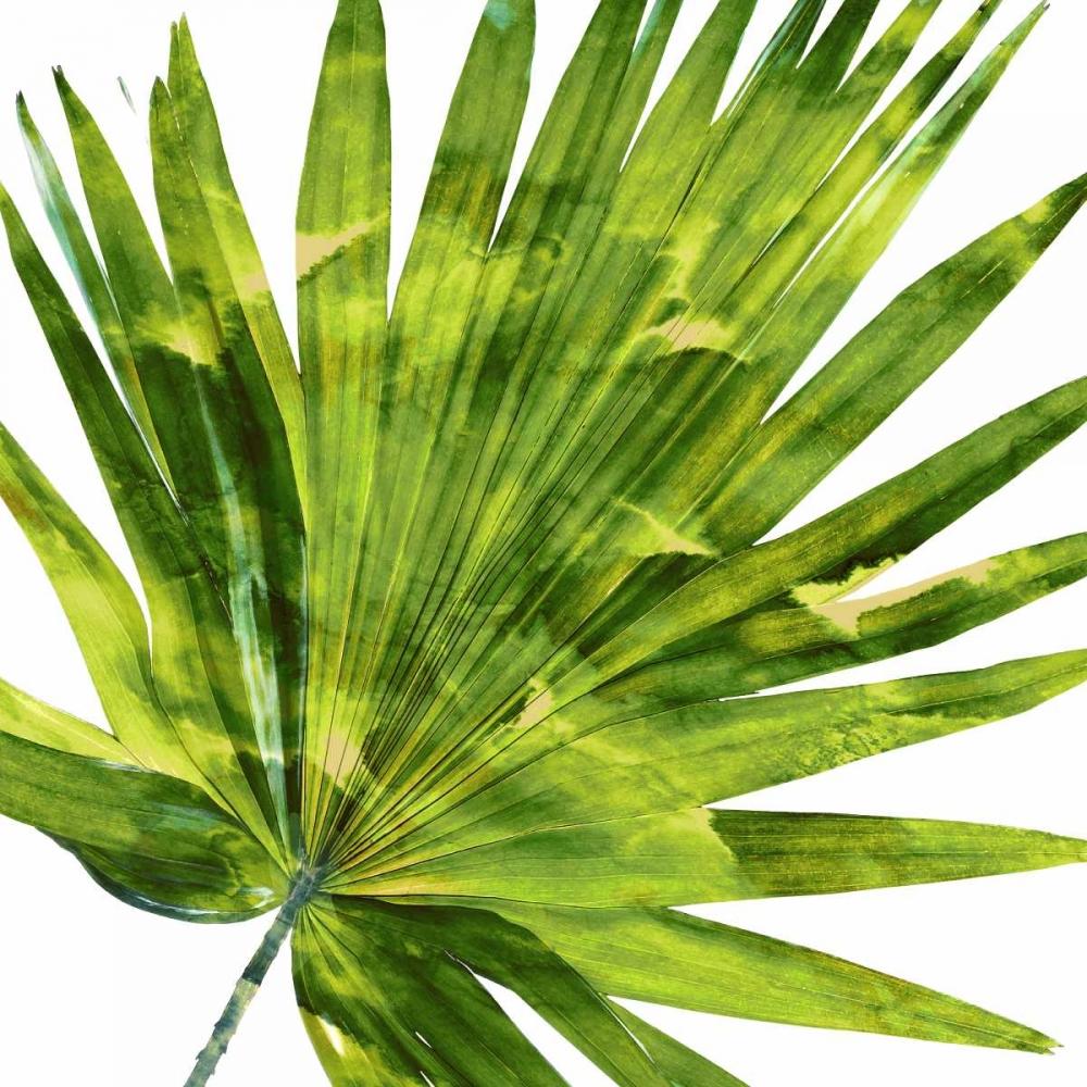 Tropical Palm IV Miller, Melonie 150685
