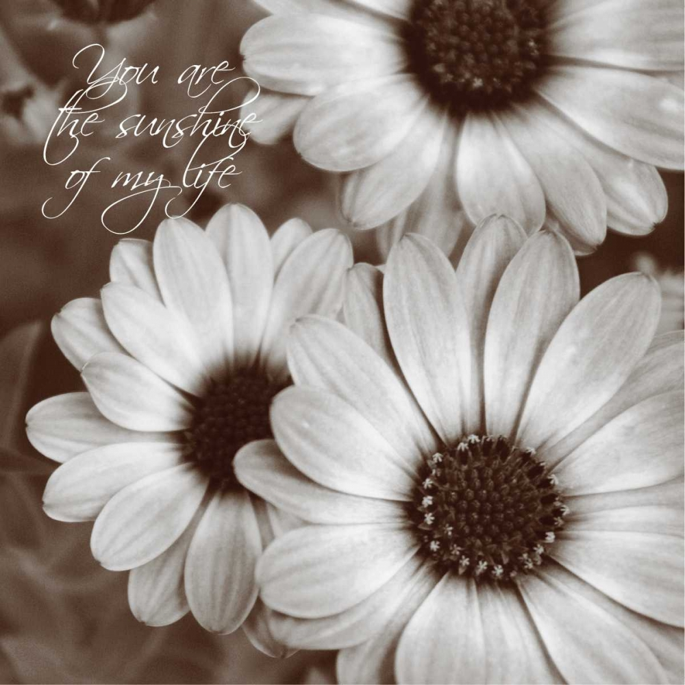 Sepia Blossoms I Romita, Denise 59439