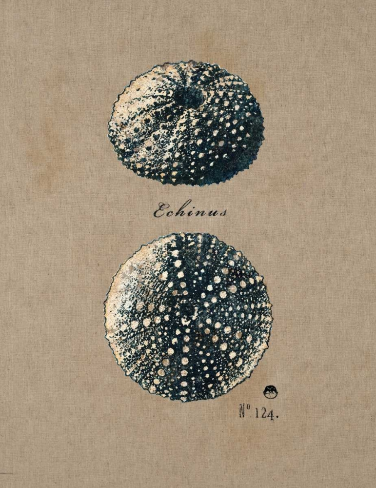 Vintage Linen Sea Urchin Regina Andrew Design 154566