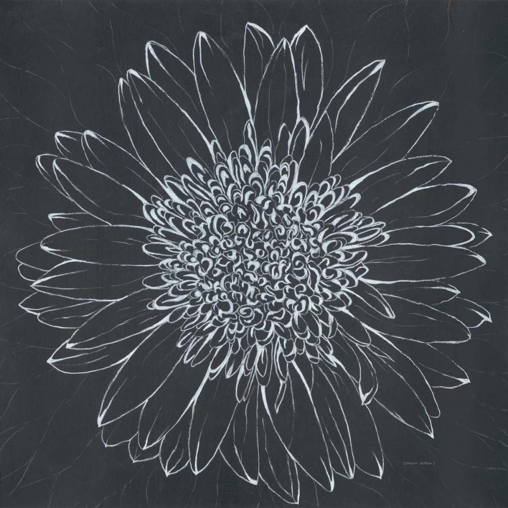 Chalk Bloom 2 Adams, Connor 56642