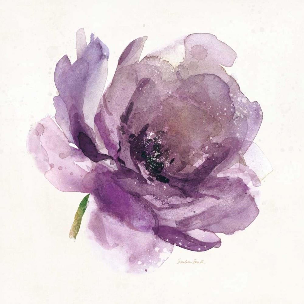 Watery Plum Bloom 1 Smith, Sandra 99614