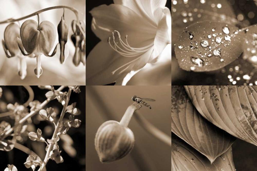 Garden Path Amber Light Gallery 64781