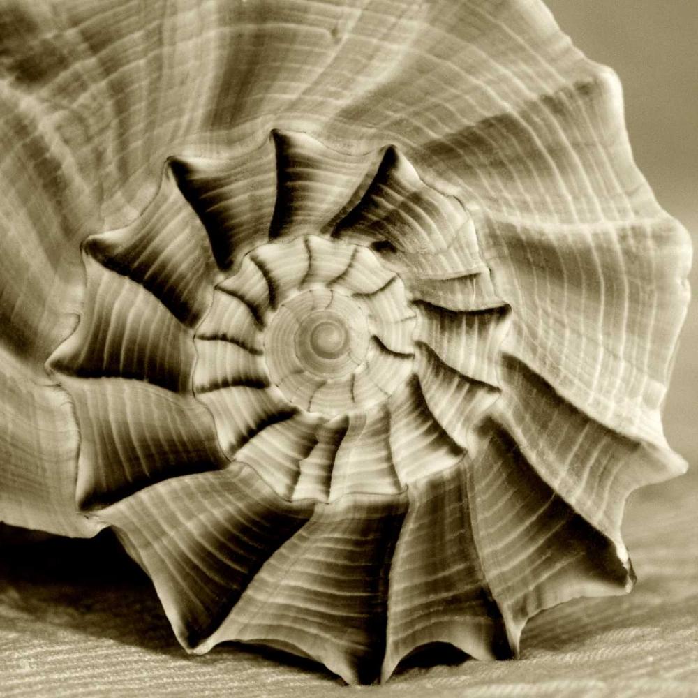 Sepia Shell Life 3 Amber Light Gallery 64803