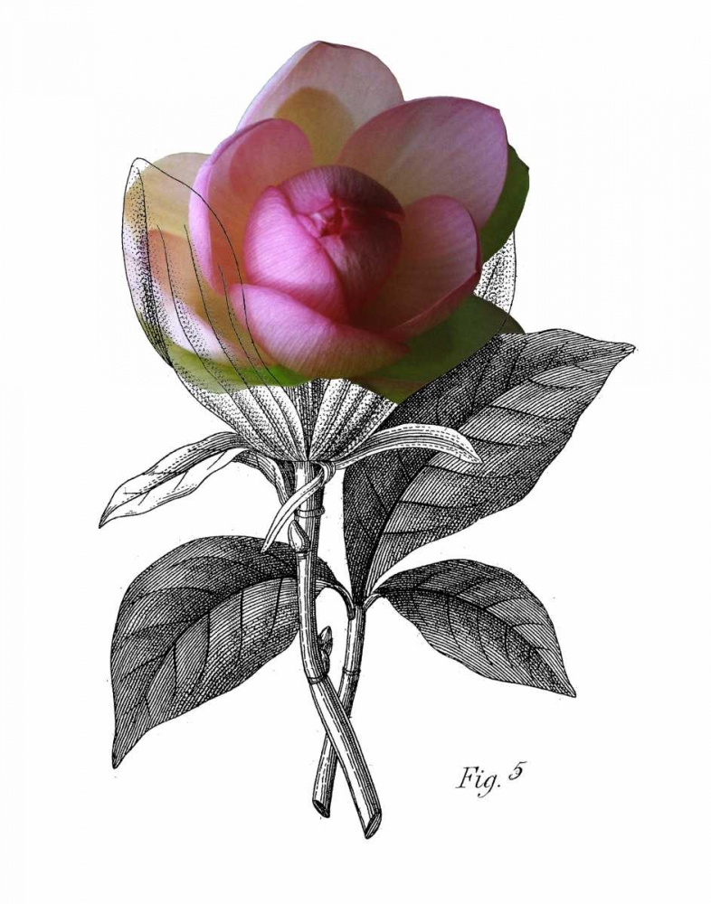 Lotus Botanical Johnston, Heather 84938