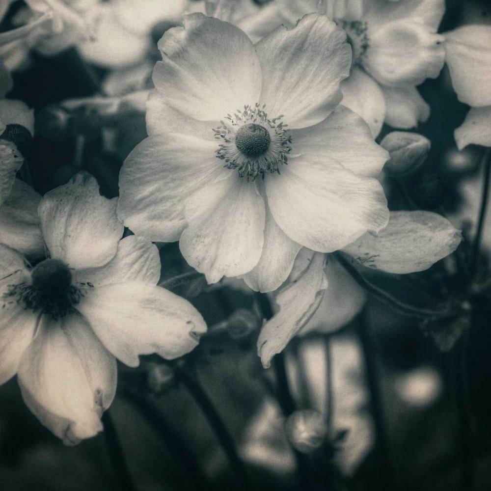 Blossoms At Dusk Hoey, Linda  84951
