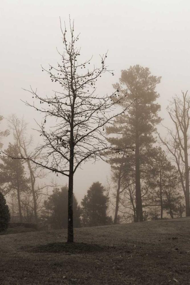 Evening Mist 1 Sememza, Marlana 59214