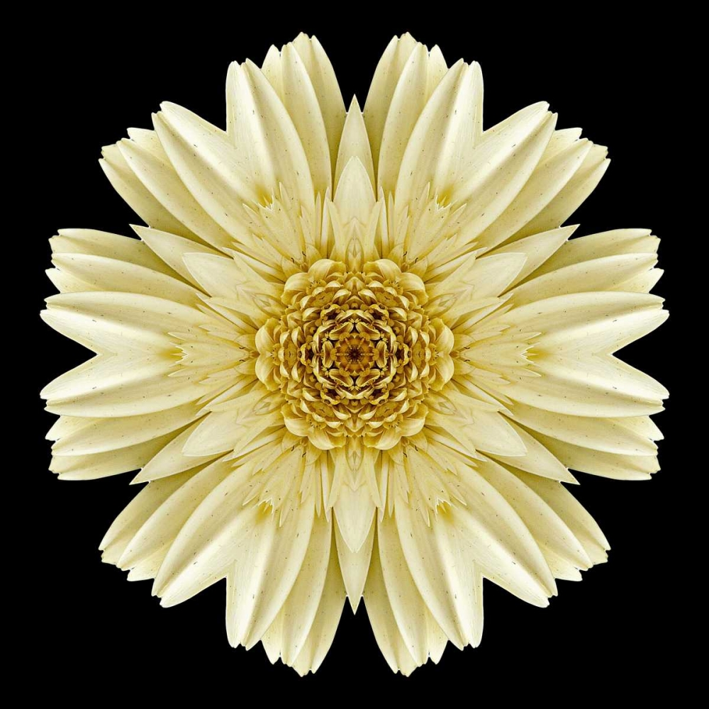 Kaleidoscope Daisy Black Bookbinder, David 105748