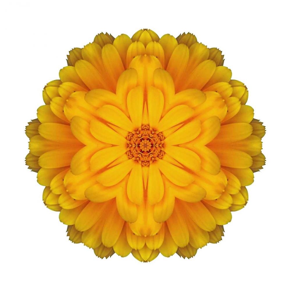 Kaleidoscope Marigold Bookbinder, David 105754
