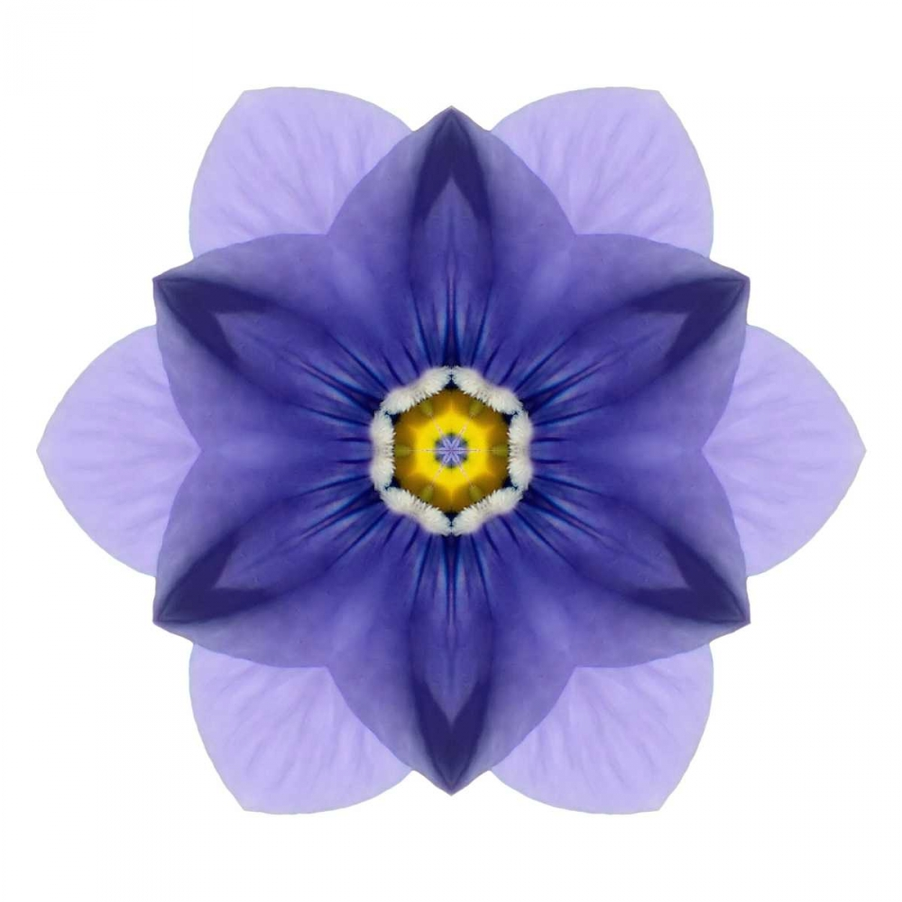 Kaleidoscope Blue Bell Bookbinder, David 105755