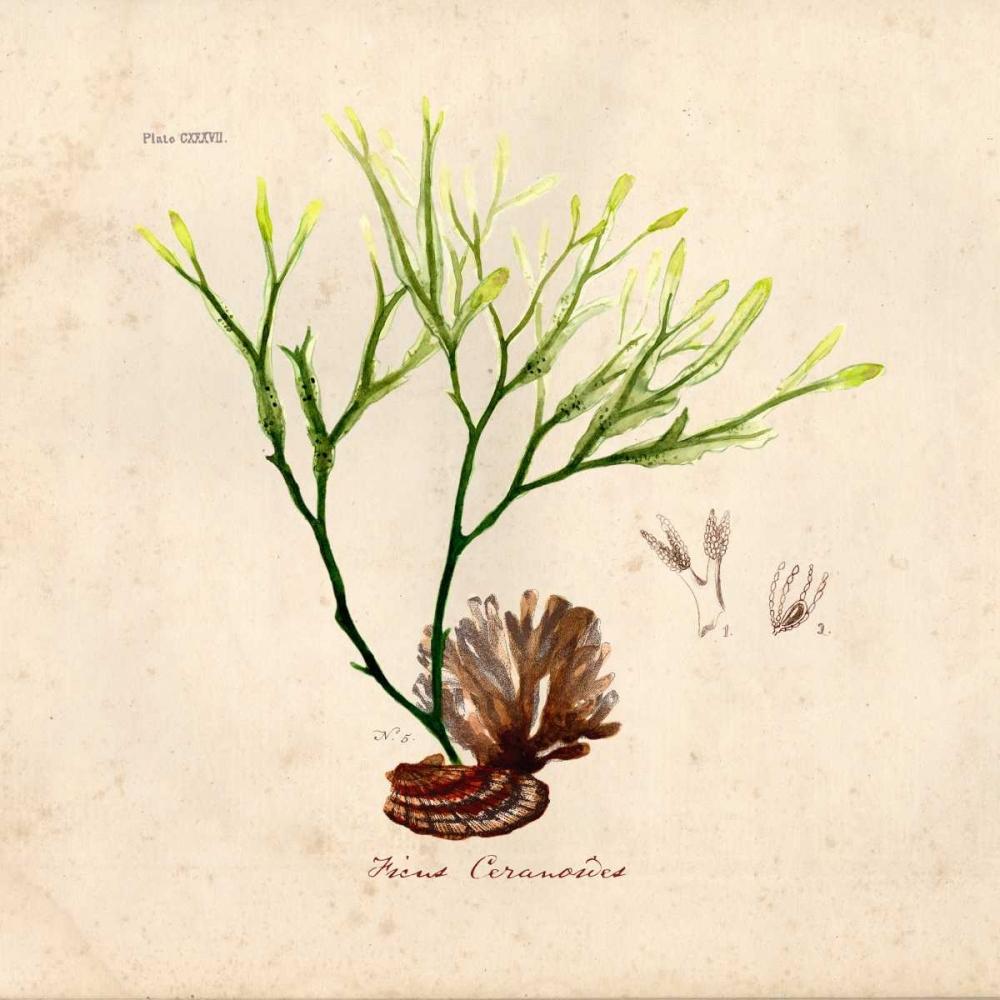 Antique Seaweed 1 Studio Z 95942