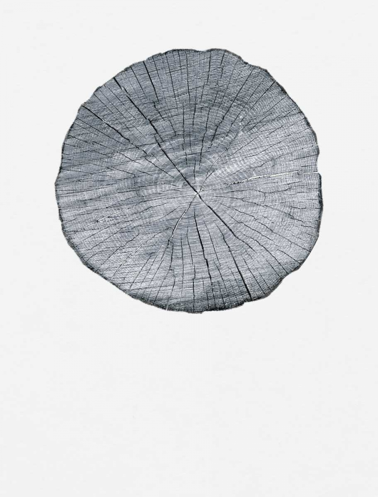 Old Growth Ring Print Appleman, Sam  85004