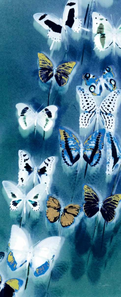 Morccan Blue Butterflies 1 Taylor, Evangeline 63524