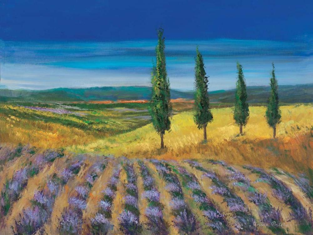 Field of lavender Paleta, Anna 57812