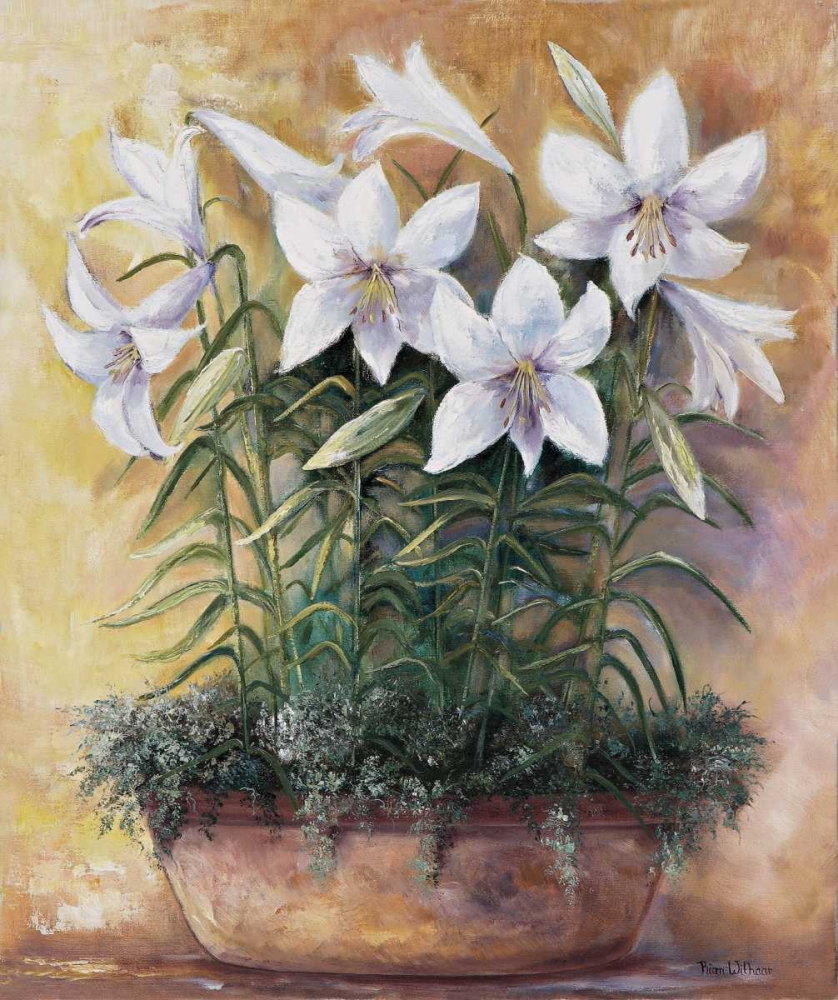 White lilies in bowl Withaar, Rian 58020