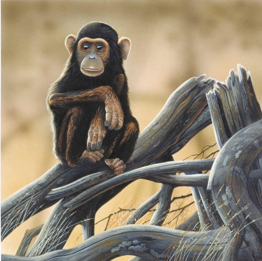 Chimpansee Weenink, Jan 58114