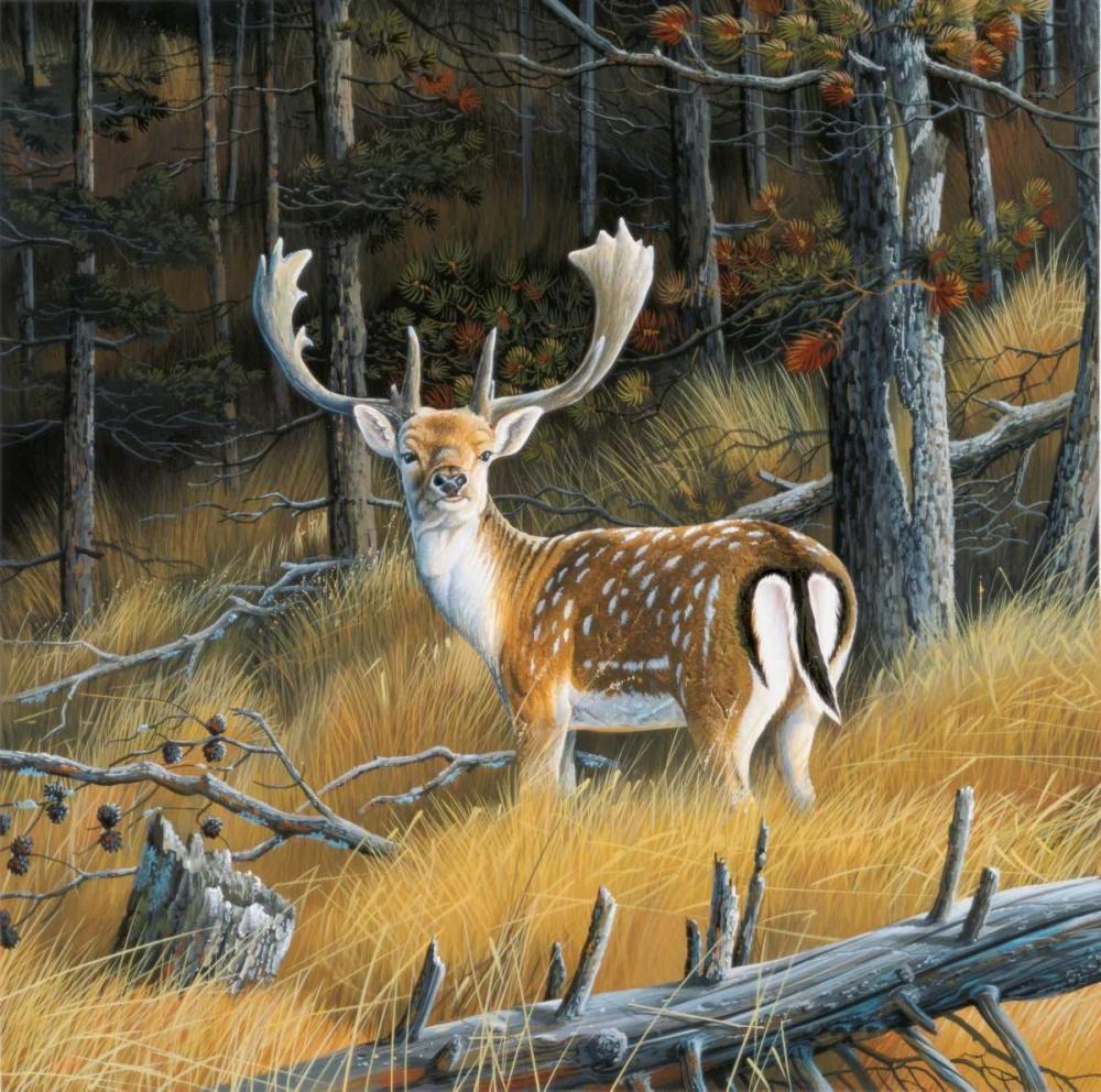 Beautiful deer Weenink, Jan 58119