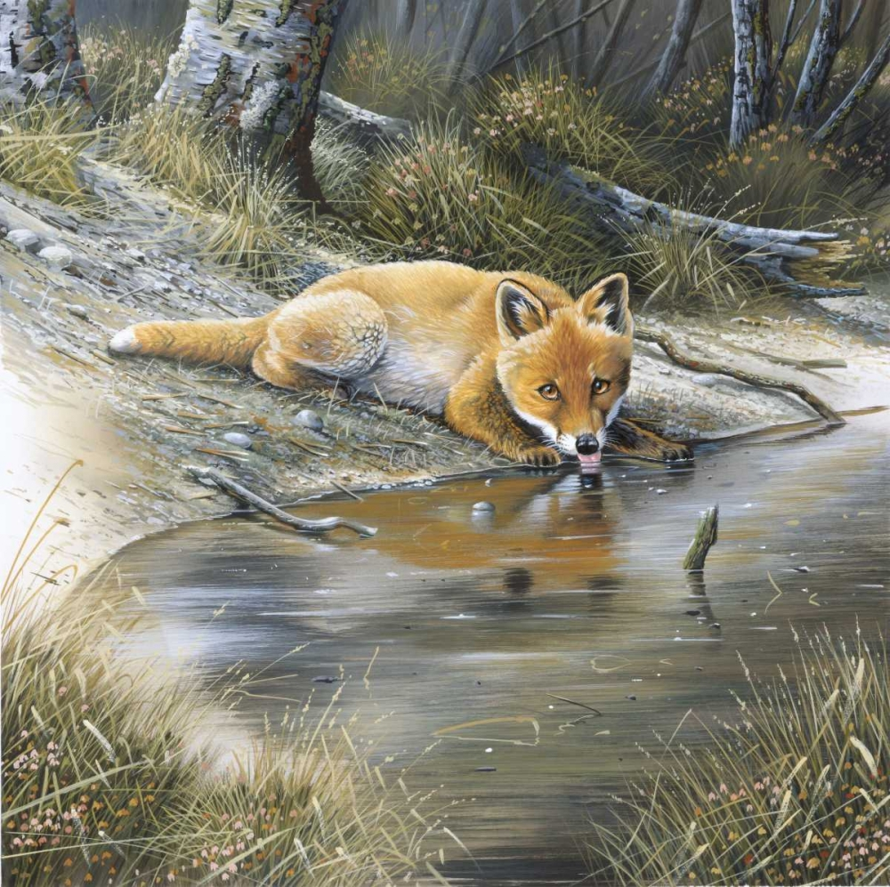 Fox drinking water Weenink, Jan 58121