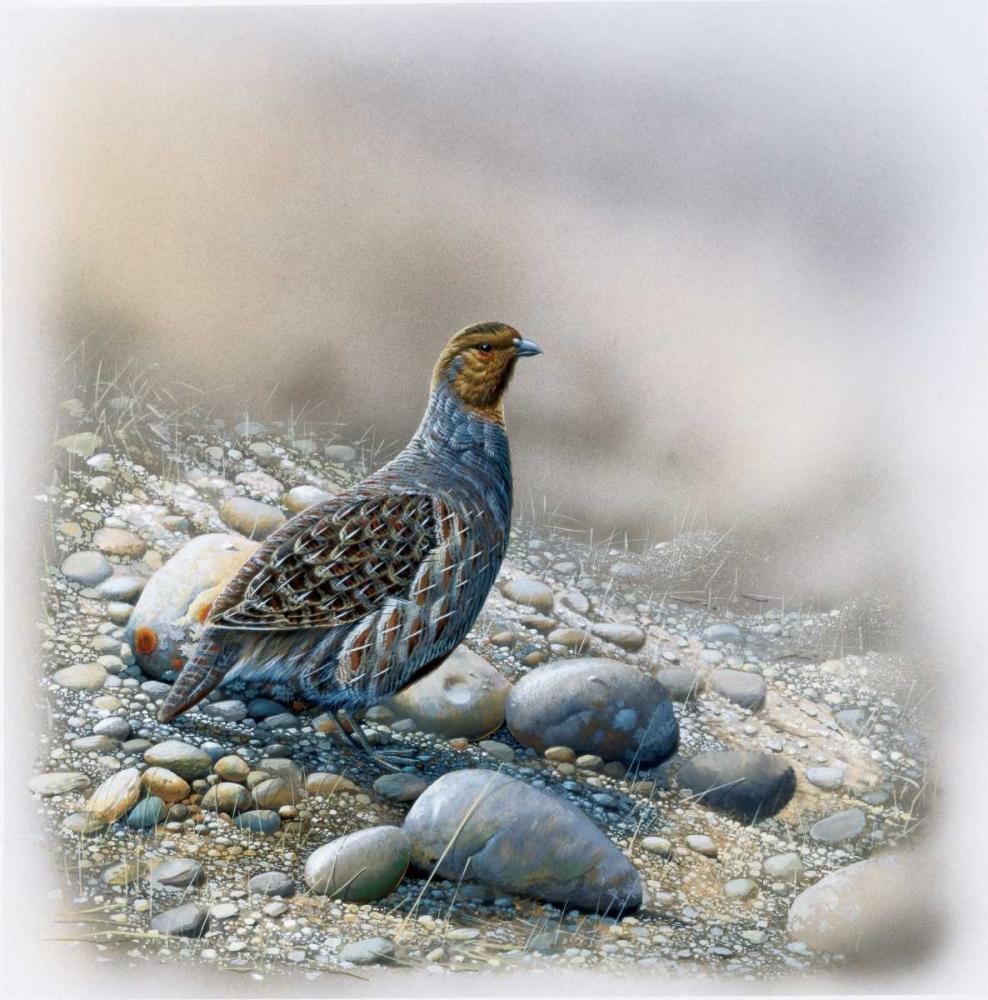 Bird between stones Weenink, Jan 58125