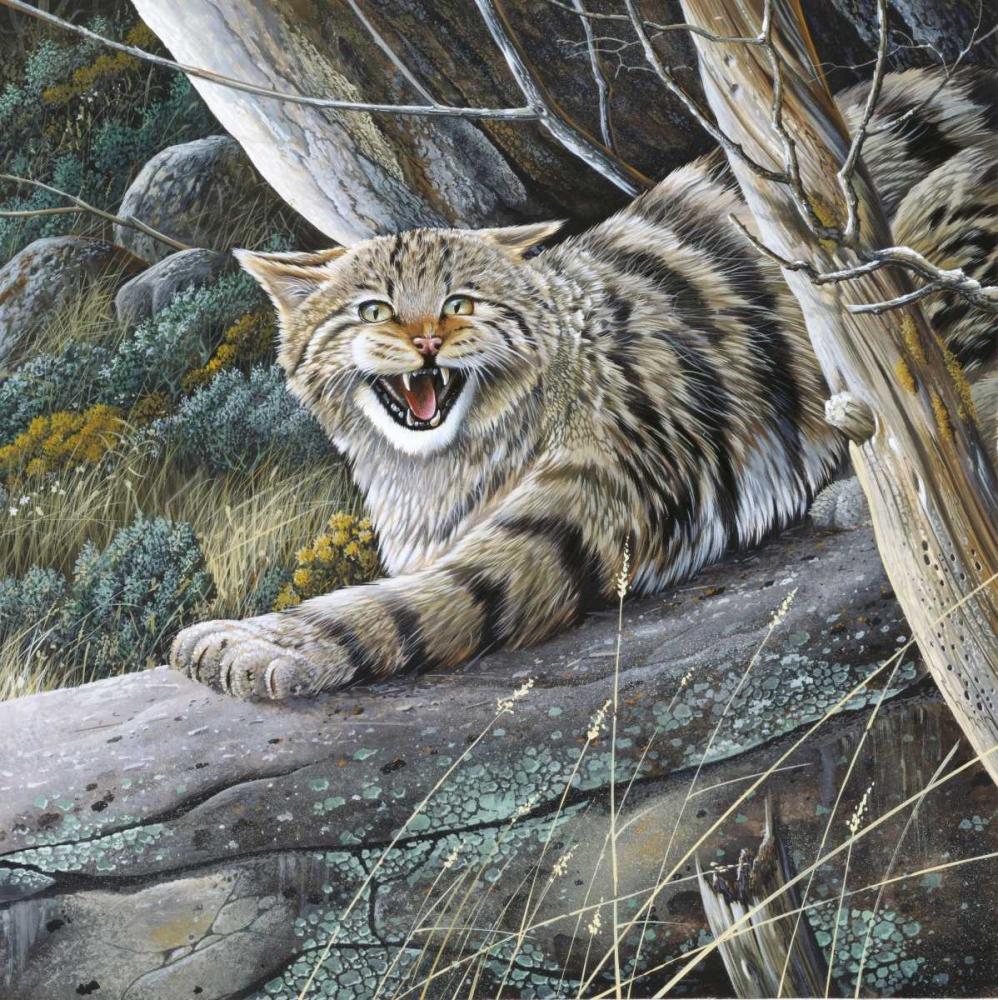 Lynx Weenink, Jan 58126