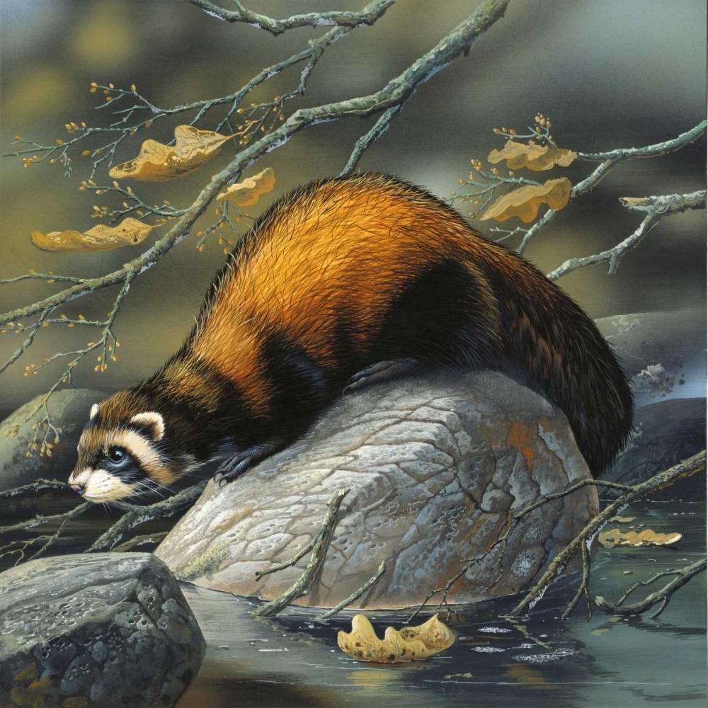 Beaver on a rock Weenink, Jan 58128