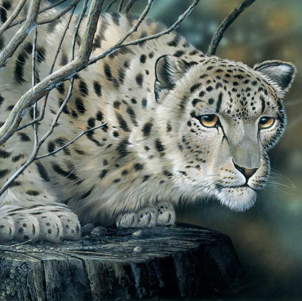 White tiger Weenink, Jan 58137