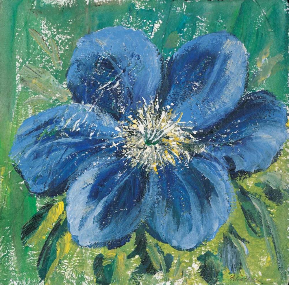 Meconopsis Schottler, Katharina 58180