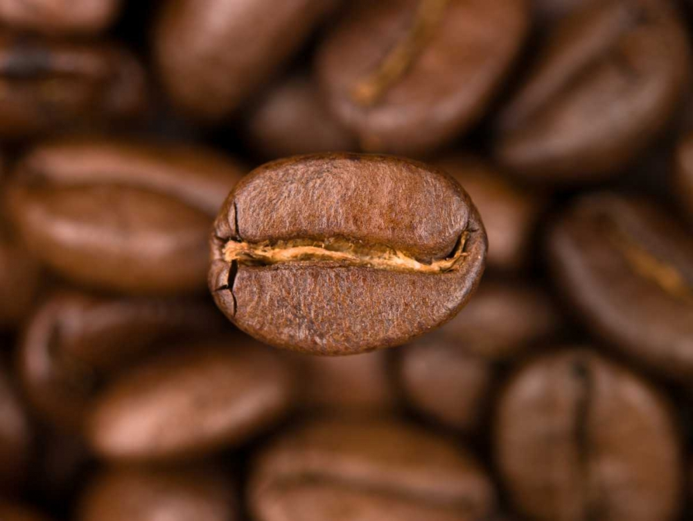 Top view of coffee beans Frank, Assaf 103153