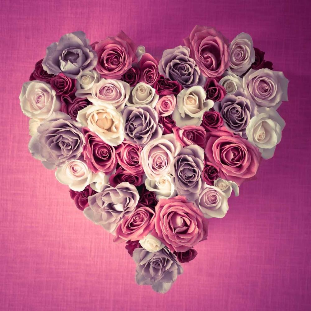 Rose Heart Frank, Assaf 103265
