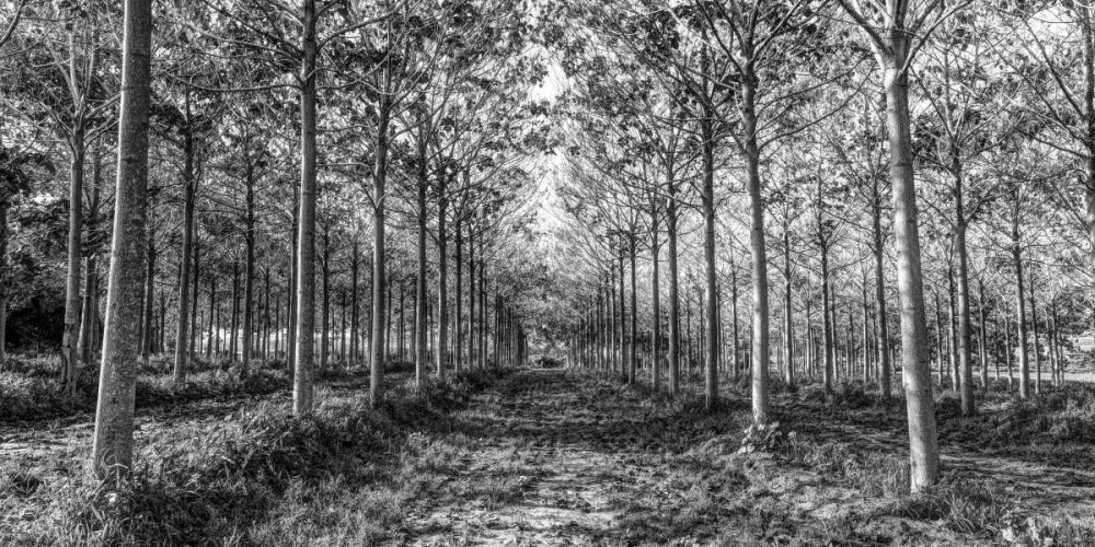 Pathway through trees in forest Frank, Assaf 104154