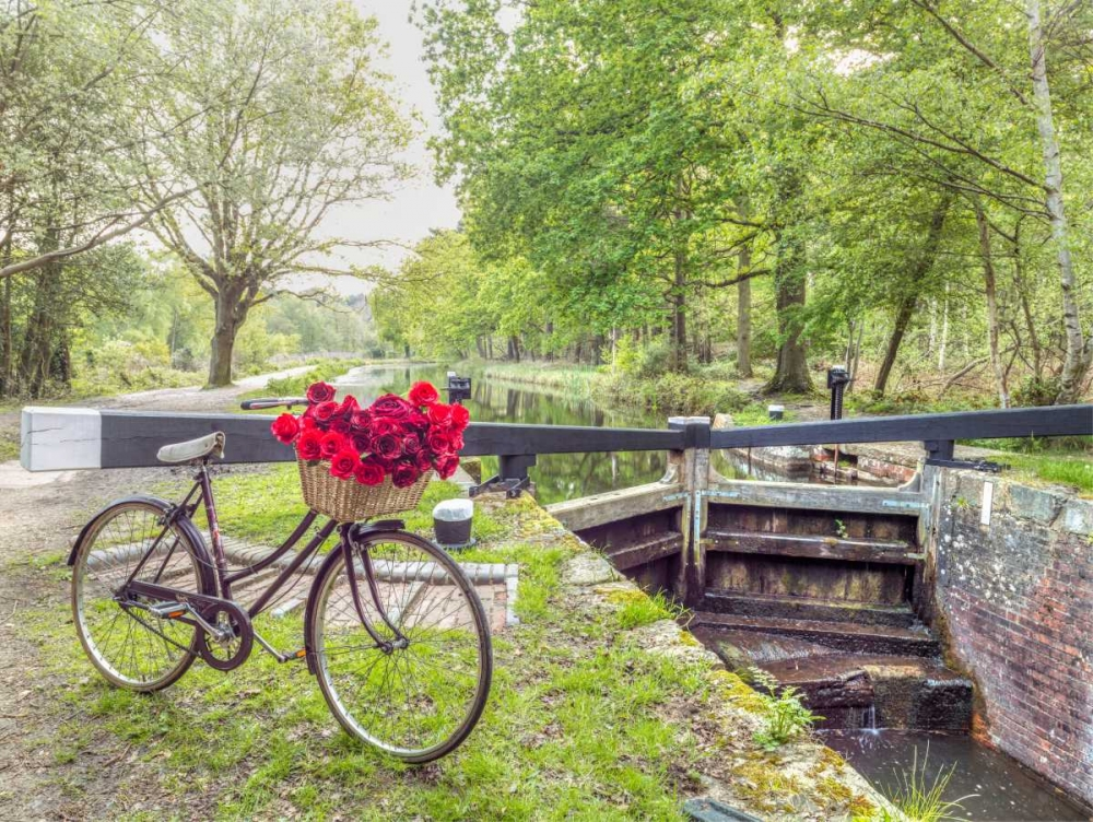 Bicycle with bunch of white roses by the canal Frank, Assaf 104373