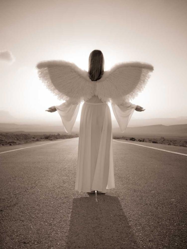 FTBR 1698 Road Angel Frank, Assaf 71817