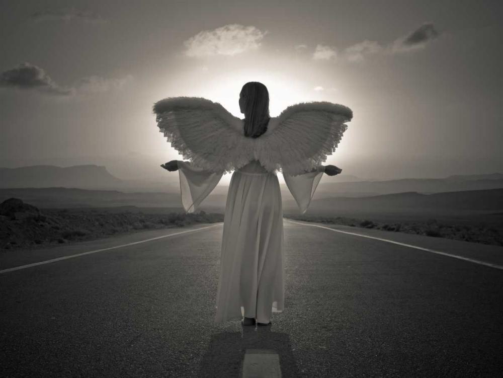 FTBR 1699 Road Angel Frank, Assaf 71818