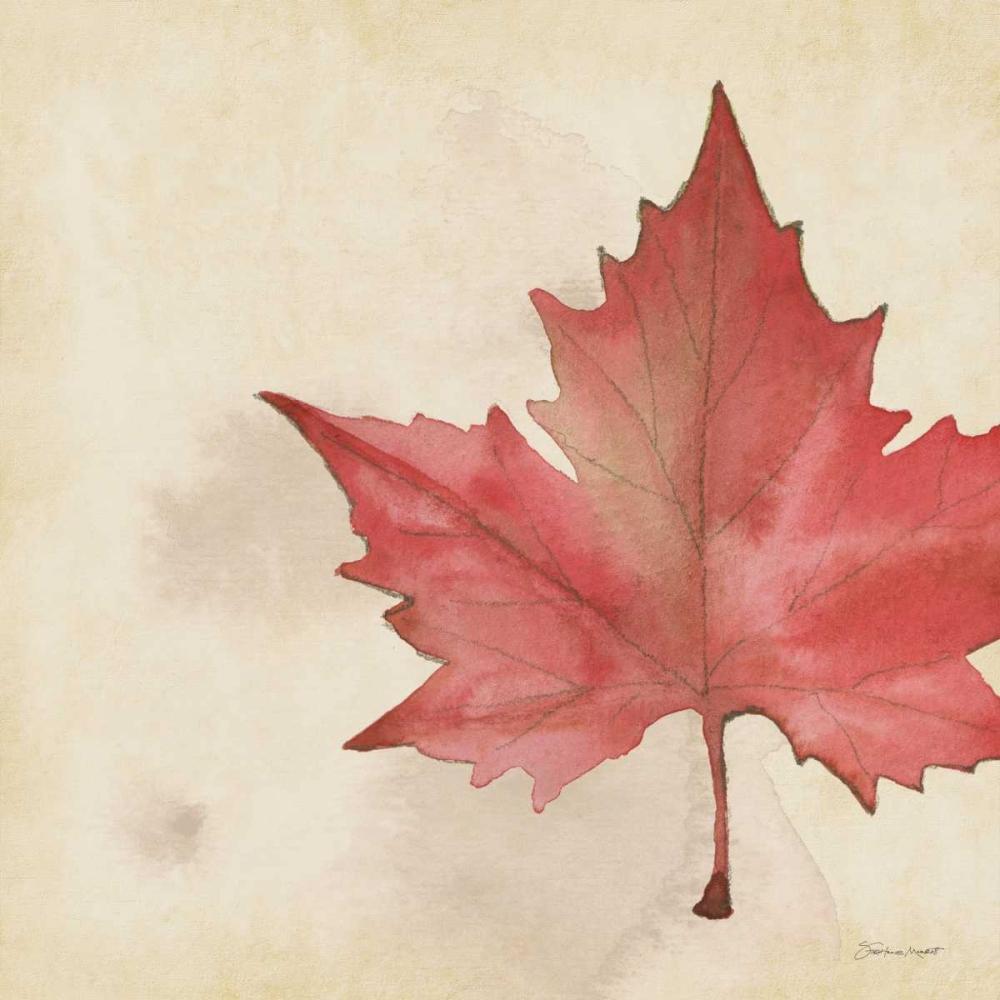 Maple In Fall Marrott, Stephanie 70260
