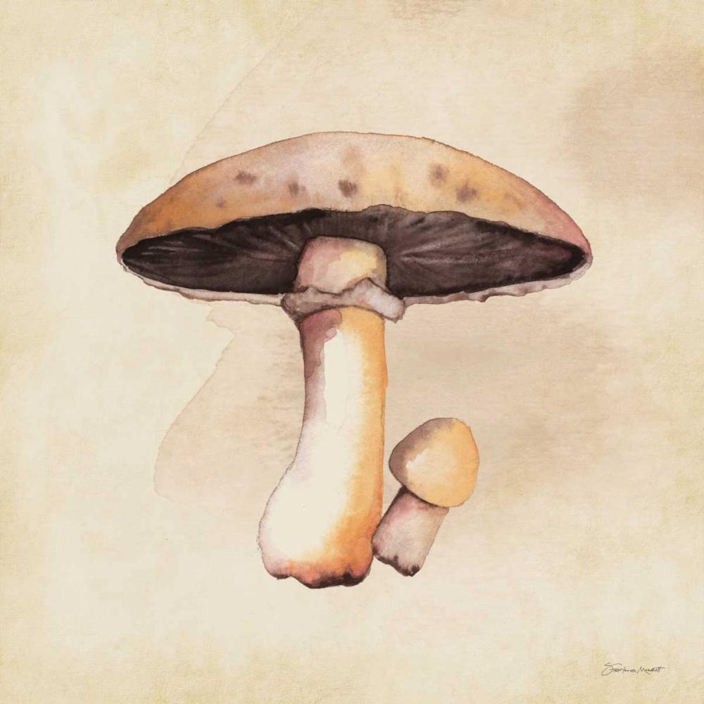 Mushrooms In Fall Marrott, Stephanie 70267