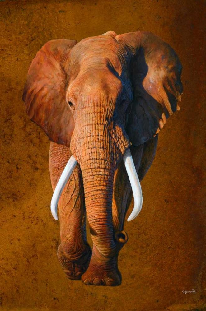 Elephant 03 Chamard, Jean-Marc 163367