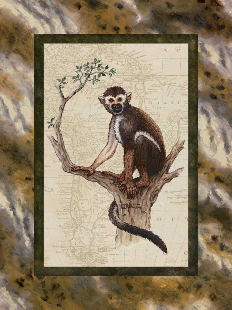 Squirrel Monkey Kruskamp, Janet 94276