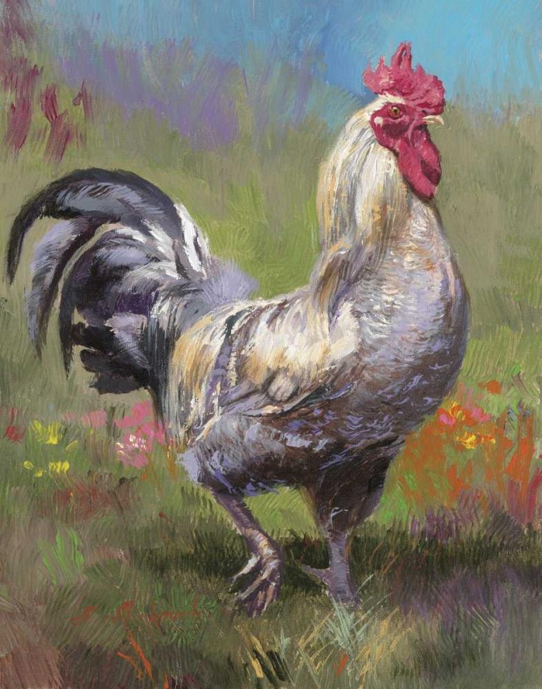 Purple Rooster Mirkovich, N. 94843