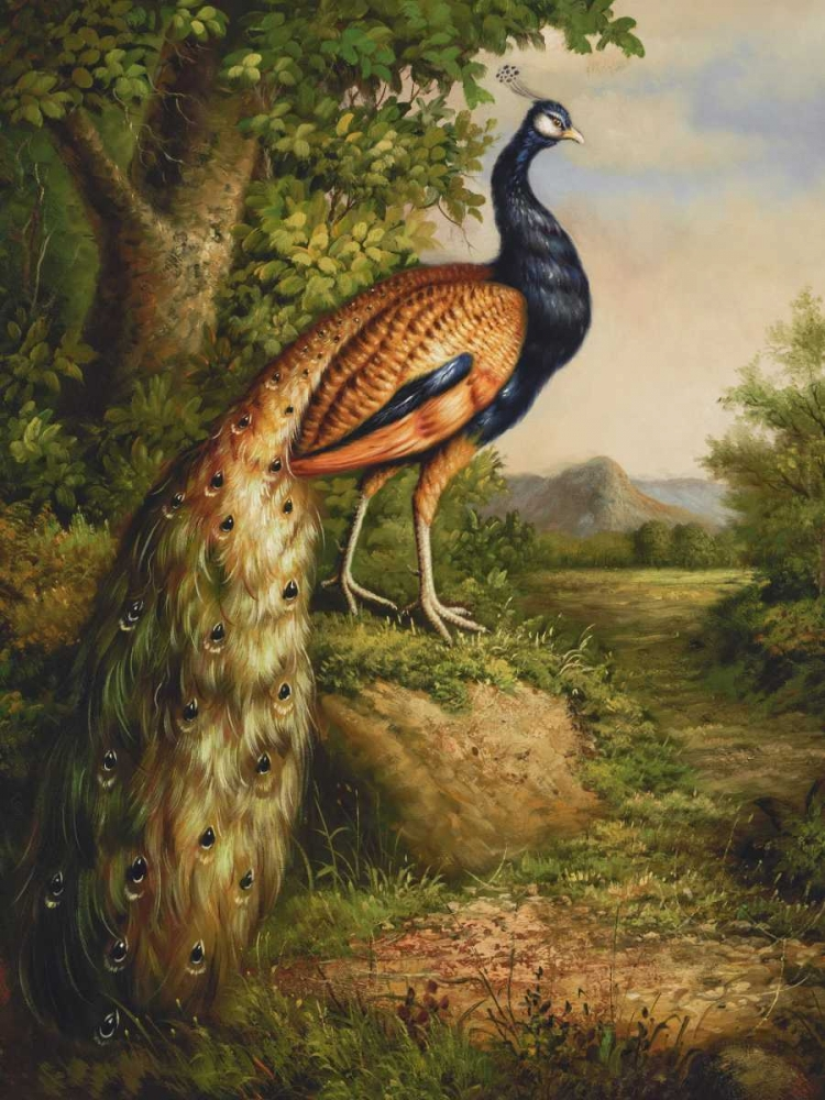 Classic Peacock Blum 95024