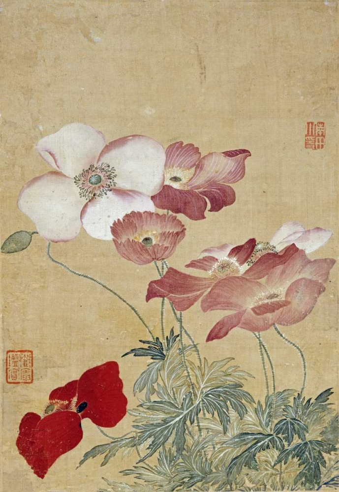 Poppies Shouping, Yun 89206