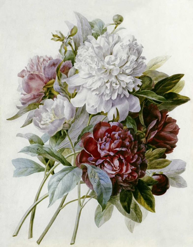 A Bouquet of Red, Pink and White Peonies Redoute, Pierre Joseph 89927