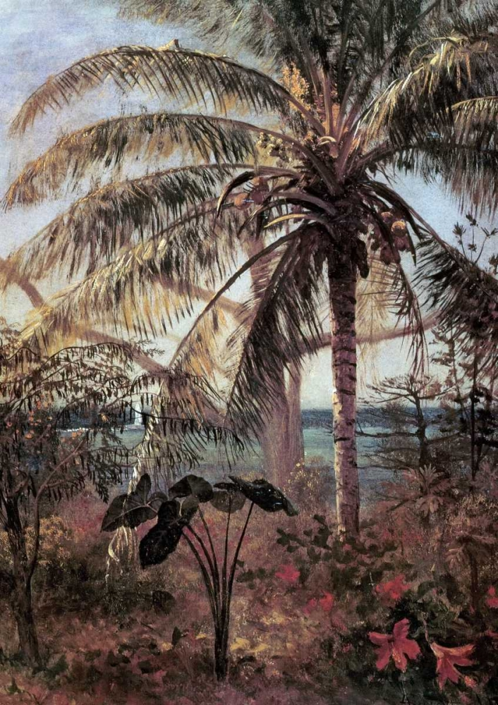 Palm Tree, Nassau Bierstadt, Albert 90207