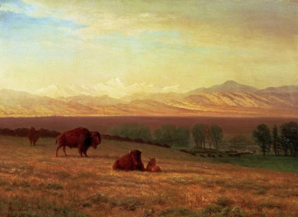 Buffalo on The Plains Bierstadt, Albert 90208