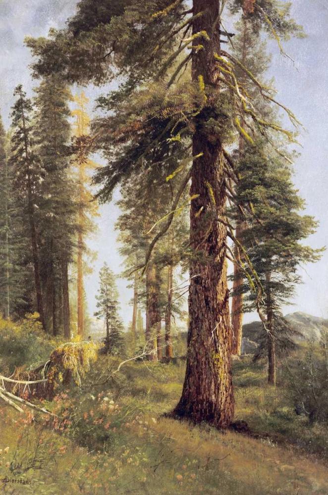 California Redwoods Bierstadt, Albert 90213